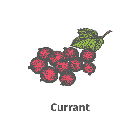 greengrocery: Vector illustration doodle sketch hand-drawn bunch of ripened red currant. Isolated on white background. The concept of harvesting. Vintage retro style. Ripe berry with leaves and branches.