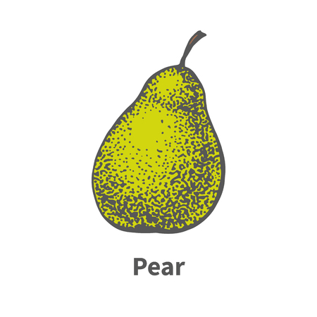 foetus: Vector illustration doodle sketch hand-drawn single ripe juicy green pear. Isolated on white background. The concept of harvesting. Vintage retro style.
