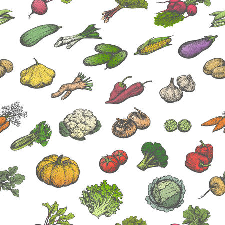 veggies: Vector illustration colored seamless pattern of a big set of juicy ripe vegetables. Isolated white background. Hand-drawn sketch veggies. Vintage retro style. Wallpaper for restaurant cafe eateries.