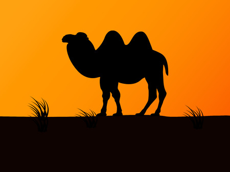 goof: Vector silhouette camel on the background sunset