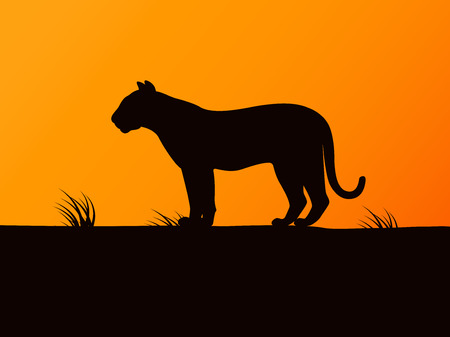 Vector black silhouette tiger on the sunset