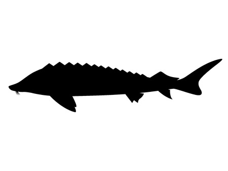 Black silhouette of sturgeon. Fish icon Çizim