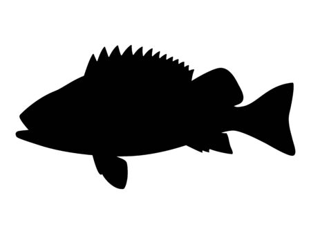 Vector illustration black silhouette of sea bass Çizim