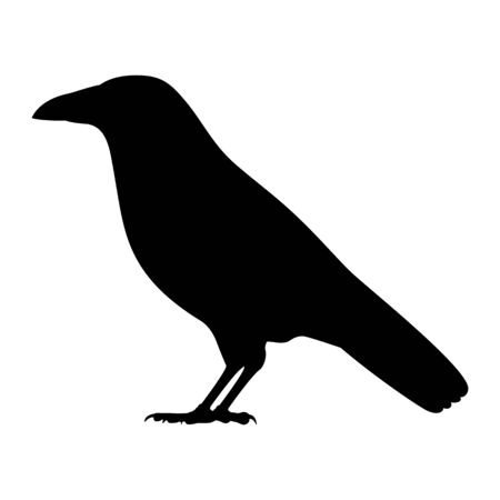 Vector illustration of black silhouette of a crow