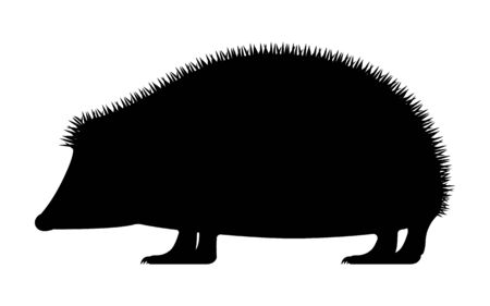 Vector illustration of black silhouette hedgehog Çizim
