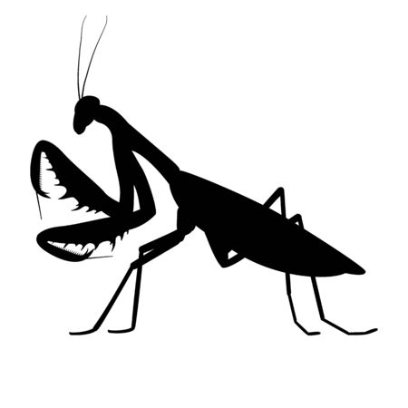 Vector illustration black silhouette of a mantis