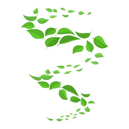 Flying green leaves in the wind isolated on white background. Spring natural vortex, whirlwind. Vector illustration of a spring swirl flying falling green leaves.