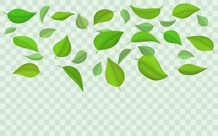Spring flying falling green leaves