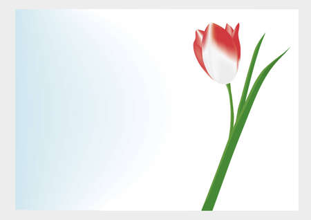 Lonely red tulip on a white-blue background