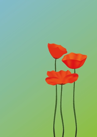 Three red poppies against the blue sky and a green grass   Illustration