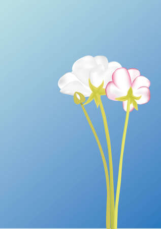 Three white florets on a light blue background