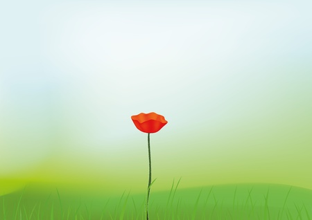 Lonely red poppy in the middle of a green field