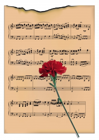 scorched: The scorched leaf with notes and a carnation Illustration
