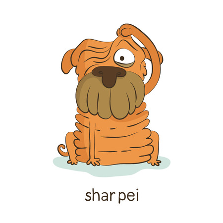 Shar pei. Cute vector cartoon dog character with wrinkles and folds isolated on white with breed caption