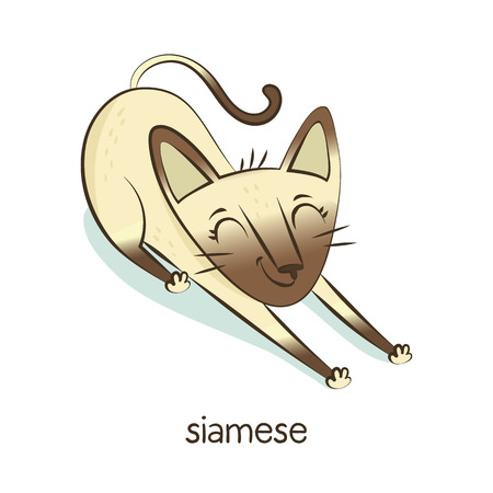 Siamese. Cute vector cartoon cat character stretching isolated on white with breed caption Иллюстрация