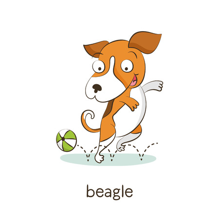 Beagle. Cute vector cartoon dog character playing with ball isolated on white with breed caption