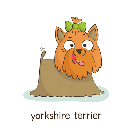 yorkshire terrier: Yorkshire terrier. Cute vector cartoon dog character isolated on white