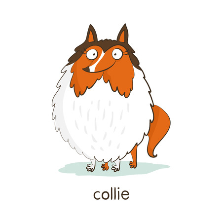 Collie. Cute vector cartoon dog character isolated on white with breed caption