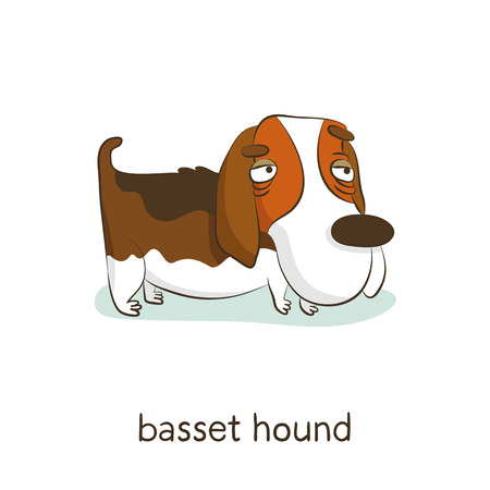 Basset hound. Cute vector cartoon dog character isolated on white with breed caption Иллюстрация