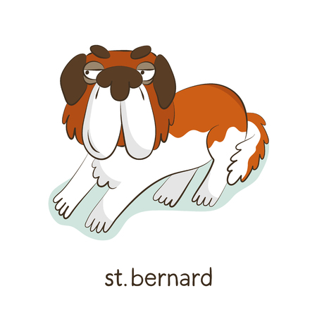 St. Bernard. Cute vector cartoon dog character isolated on white with breed caption