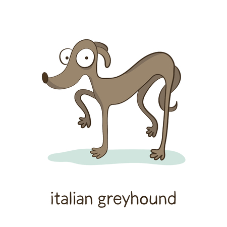 Italian greyhound. Cute vector cartoon dog character playing with ball isolated on white with breed caption