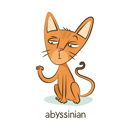 Abyssinian. Cute vector cartoon cat character isolated on white with breed caption
