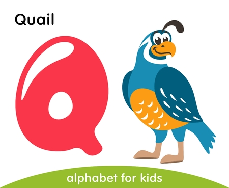 Pink letter Q and blue Quail. English alphabet with animals. Cartoon characters isolated on white background. Flat design. Zoo theme. Colorful vector illustration for kids.