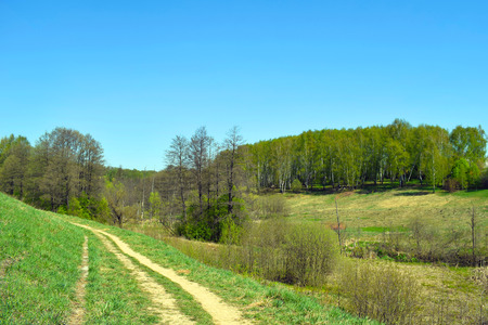 Grassy road, green hills, birch forest and blue sky. Spring or summer landscape.