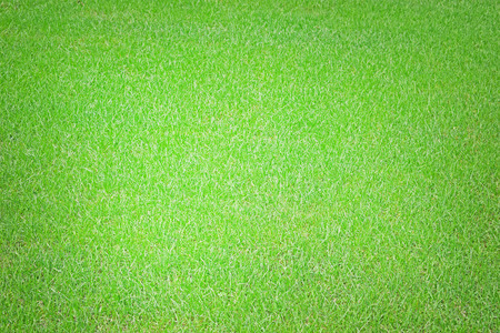 Green grass texture. Fresh spring background. Lawn, meadow or field.