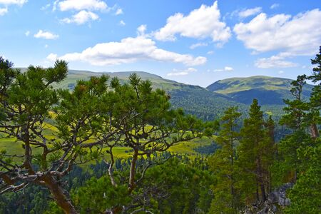 Beautiful mountains, meadows and green pines. Blue sky and white clouds. Summer landscape, sunny day. Horizontal photo. Plateau Lago-Naki, Adygea. Stock Photo