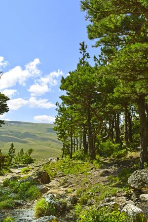 Beautiful coniferous forest, mountains and meadows. A path among stones and tree roots. Summer landscape, sunny day.  Vertical photo. Plateau Lago-Naki, Adygea.