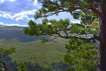 Picturesque mountains, meadows and green pines. Blue sky and white clouds. Summer landscape, sunny day. Horizontal photo. Plateau Lago-Naki, Adygea.