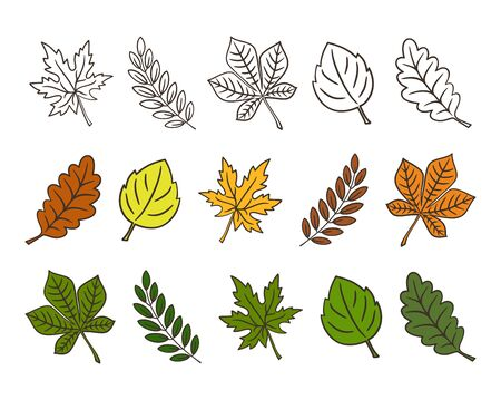 Set of colorful autumn and summer leaves with a dark outline. Isolated on white background. Simple cartoon flat style. Vector illustration.