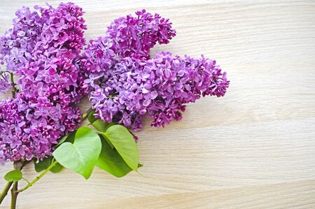 Sprigs of freshly cut purple lilac on a light beige wooden background. Greeting card for mother's day or birthday with copy space. Top view. Horizontal photo.