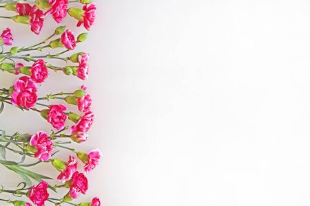 Beautiful pink carnations lie evenly to the left on a light background. Template frame for greeting card for congratulations on mother's day, birthday or wedding. Horizontal photo. Imagens