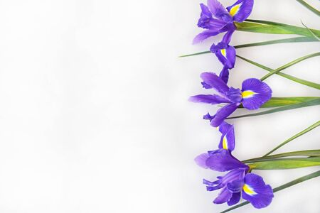 Three purple irises lying exactly right on a light background. Blank for a holiday card for mother's day or birthday. Copy space (place for text). Horizontal photo. 免版税图像