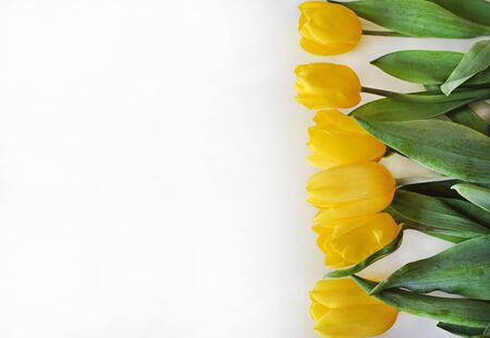 Bright yellow tulips and green leaves lying on a light gray background. Template for greeting card for a birthday, easter, wedding or mother's day. Place for text (copy space). Horizontal photo. Zdjęcie Seryjne