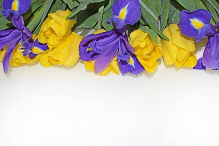 Yellow tulips, purple irises, green leaves and stems. Horizontal photography. Greeting card for mother's day, birthday, wedding.