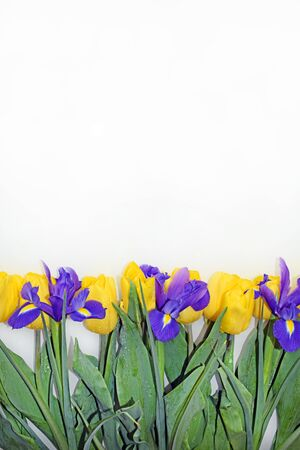 Yellow tulips, purple irises, green leaves and stems. Vertical photo. Greeting card for mother's day, birthday, wedding.