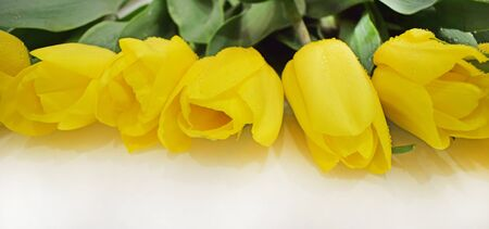 Yellow tulips, green leaves and stems. Horizontal photography. Greeting card for mother's day, birthday, wedding.