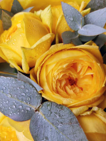 Bouquet of beautiful yellow roses close-up, gray-green leaves with water drops. Festive vertical photography for Birthday, Valentine's Day, Mother's Day. 免版税图像