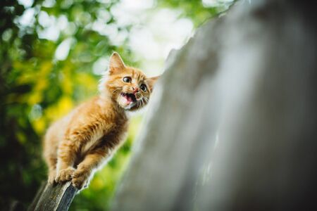 The red kitten is trying to jump over the prescription. He's scared. Stock fotó
