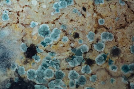 Mold growing on a petri plate. Close-up.