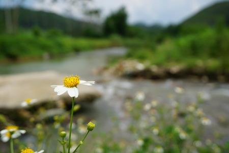 thriving: small white flower Stock Photo