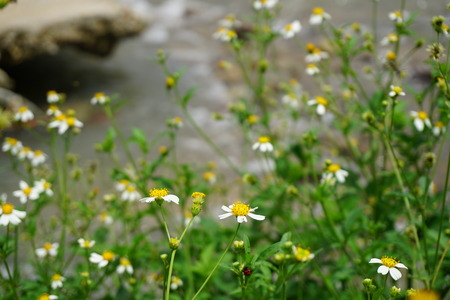 floret: floret beside stream