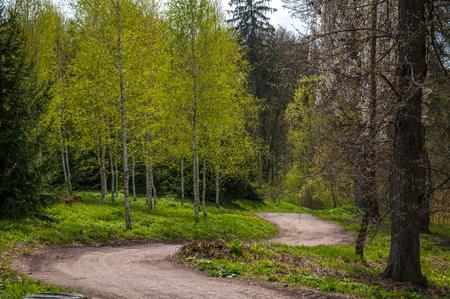 Spring in forest. Ukraine
