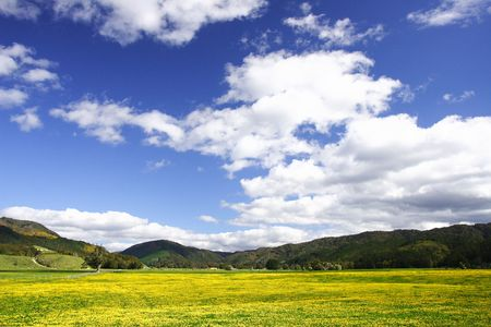 pure sky pure meadow photo