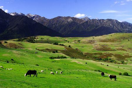 平和的な農地