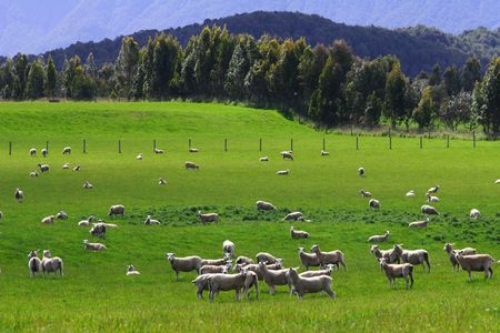 Rural sunset New Zealand