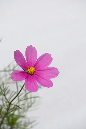 A purple flower photo